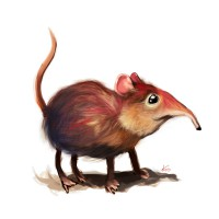 http://www.carbonatedink.com/files/gimgs/th-25_elephant-shrew.jpg