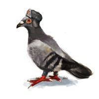 http://www.carbonatedink.com/files/gimgs/th-25_pigeon.jpg