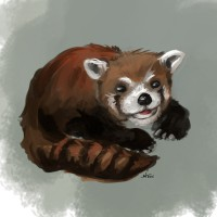 http://www.carbonatedink.com/files/gimgs/th-25_red panda.jpg