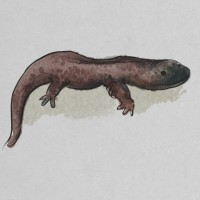 http://www.carbonatedink.com/files/gimgs/th-31_salamander.jpg